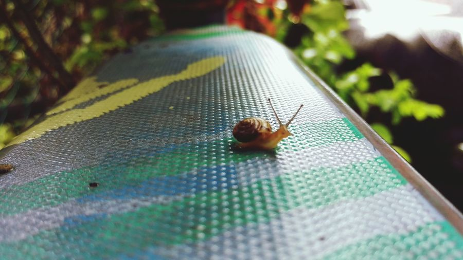 Rainy Day Growing Better Snail🐌 Snail Little Creatures Wonderful Day Nature Beautiful Nature Micro Photography Micro Nature