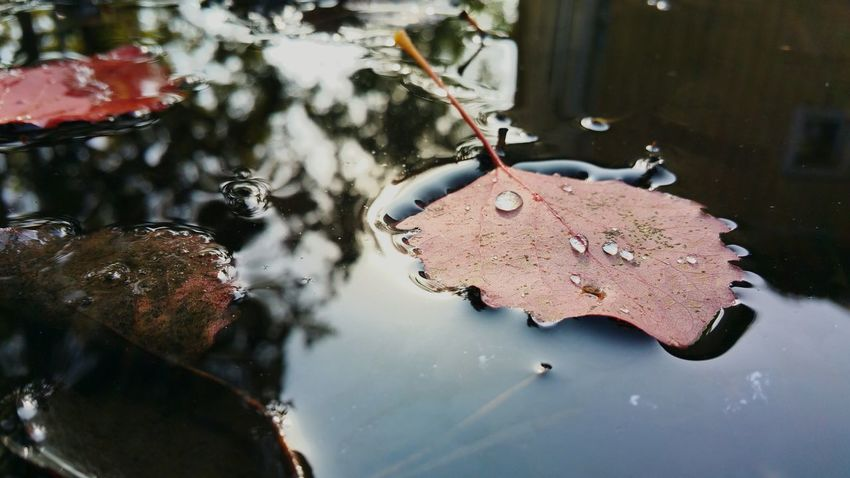 Autumn Autumn Colors Autumn Leaves EyeEm Selects No People Day Outdoors Water Nature Close-up Animal Themes