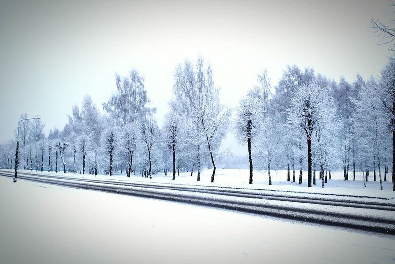 Taking Photos Nature Photography Photography Hello Winter Ice Belarus Snow Winter Roadside Road On The Road Pavement Trees Birch Tree Willow Tree