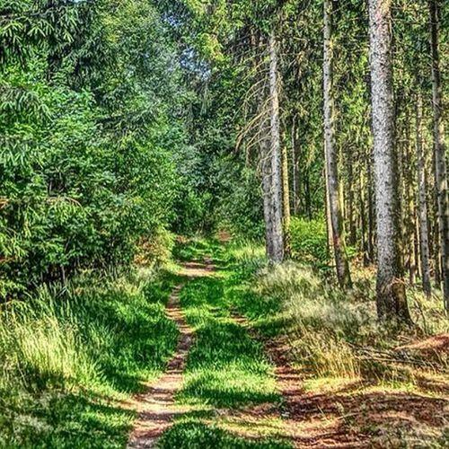 Sklblog Ottbergen Kreuzberg Heidelbeerenberg Trail