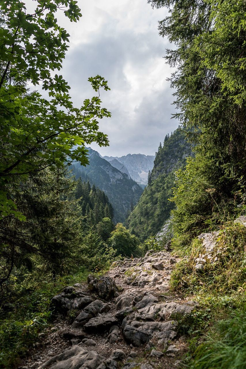 tree, mountain, forest, nature, sky, day, beauty in nature, no people, outdoors