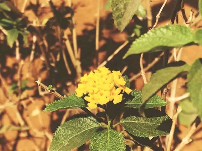 Leaf Plant Growth Green Color Nature Beauty In Nature EyeEmNewHere Fragility Freshness Close-up Outdoors Day Focus On Foreground No People Flower Sunlight Blooming Flower Head Autumn Mood EyeEmNewHere