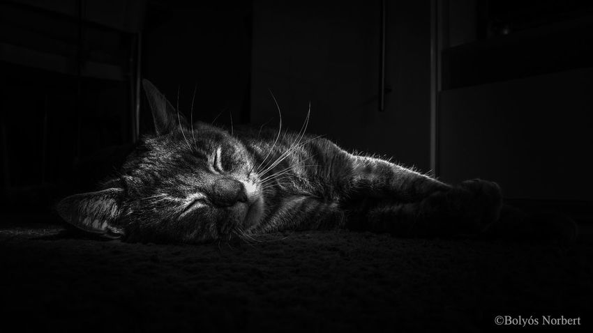 EyeEm Selects Cat B&w Photography First Eyeem Photo