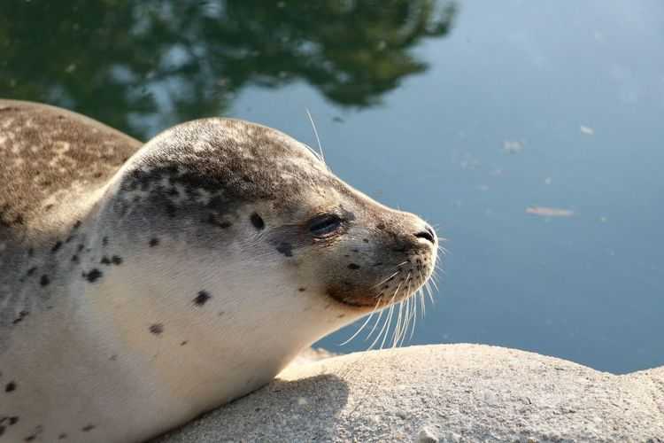 Seal Robbe Seal