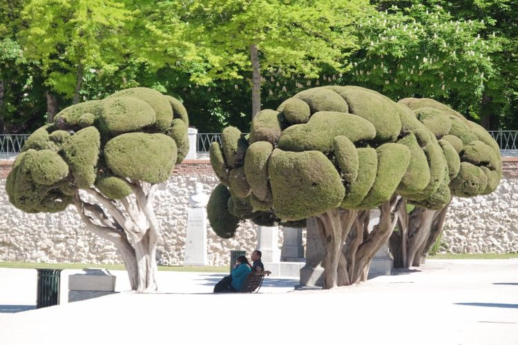 Trees Plant Tree Green Color Growth Real People Nature Day Park Park - Man Made Space Sculpture Art And Craft Garden Topiary Outdoors