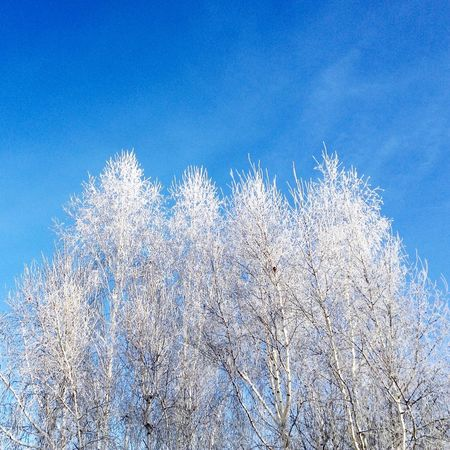 Enjoying Life Photography Taking Photos Winter Blue Snow College Minimalism Morning Irkutsk Nature Trees