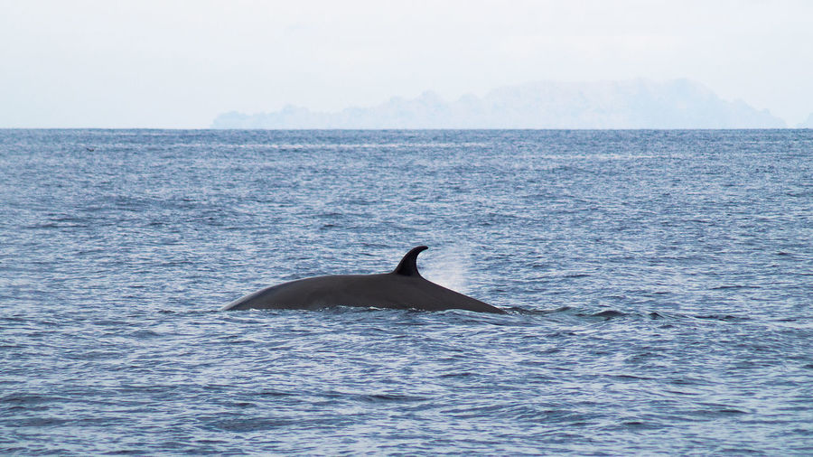Side View Of A Dolphin On Blue Sea Against Sky
