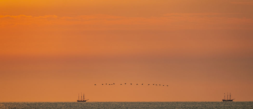 Two old sailing vessels and a flock of birds. Animal Animal Themes Animals In The Wild Beauty In Nature Bird Flock Of Birds Horizon Over Water Nature Nautical Vessel No People North Sea Orange Color Outdoors Sailing Vessel Scenics - Nature Sea Sky Sunset Sunsets Tranquil Scene Tranquility Transportation Vertebrate Water Waterfront