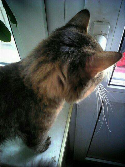 Кузяка_Железяка внимательный взгляд Серый кот фотоохота_на_кота фотоохота Hi! Grey Cat Popular My Cat Eye4photography