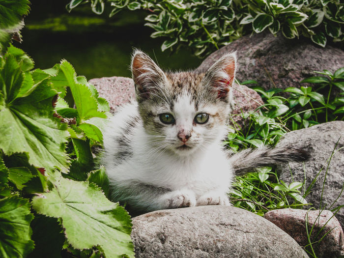 EyeEm Nature Lover Nature Nature Photography Outdoors Naturelovers Beauty In Nature Green Color Spring Green Animal Themes Cats Pets Portrait Looking At Camera Feline Domestic Cat Cute Close-up Plant Kitten Young Animal Cat