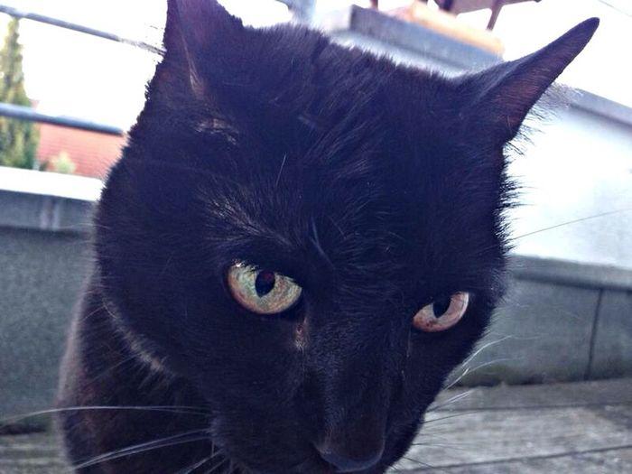 Black Cat Miezekatze