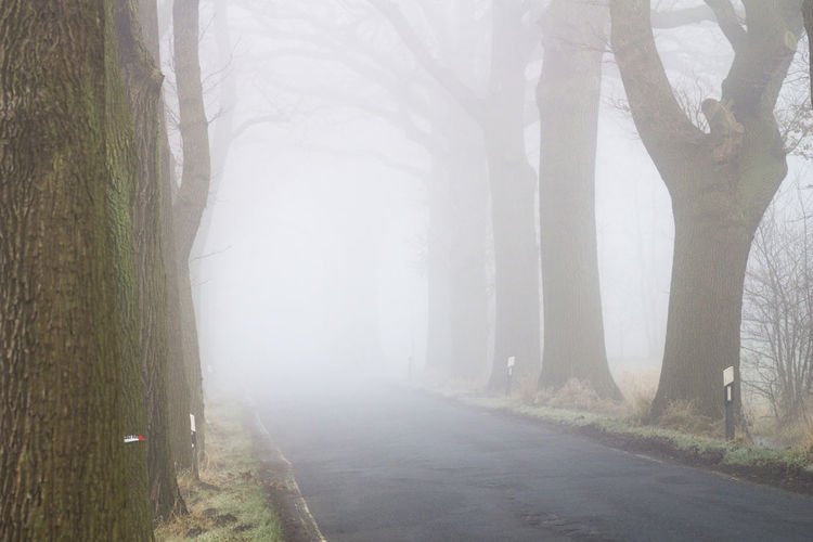 Tree avenue with country road in the fog Road Road Traffic Asphalt Tree Asphalt Road Beauty In Nature Day Fog Foggy Foggy Day Landscape Mist Nature Outdoors Street Tree