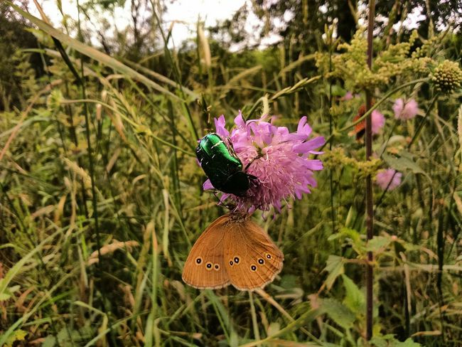Flower Insect Nature Growth Animals In The Wild Animal Themes Plant Beauty In Nature Day No People Outdoors Fragility Freshness Flower Head Close-up Butterfly - Insect Butterfly