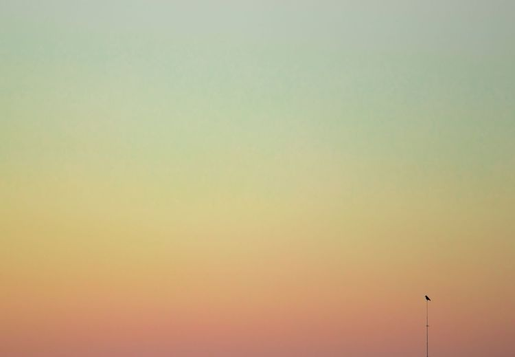Birds Of EyeEm  Beauty In Nature Birds Birds_collection Clear Sky Minimalism Minimalistic Minimalobsession Nature Nature_collection Naturelovers No People Outdoors Scenics Silhouette Sunset Tranquil Scene Tranquility