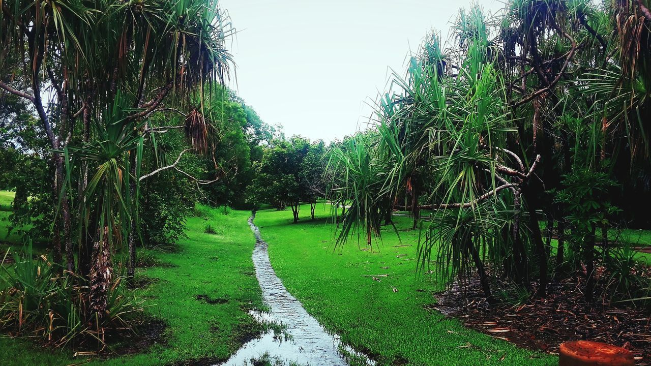 growth, tranquil scene, nature, tranquility, beauty in nature, tree, green color, grass, scenics, the way forward, outdoors, day, plant, no people, bamboo grove, landscape, bamboo - plant, walkway, sky, water