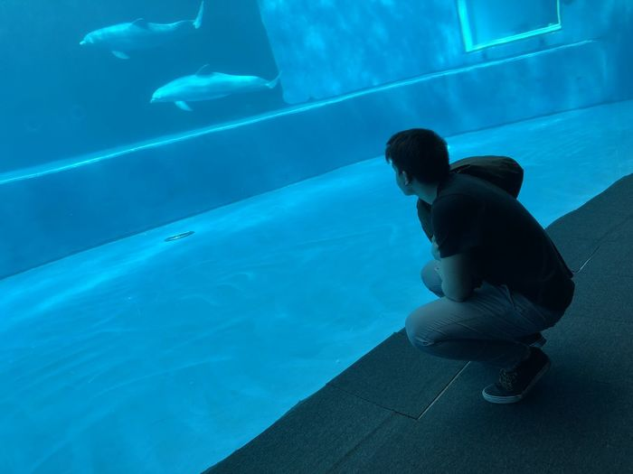 Side view of man looking at dolphins swimming in fish tank aquarium