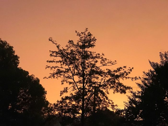 Nofilter Sky Tree Sunset Orange Color