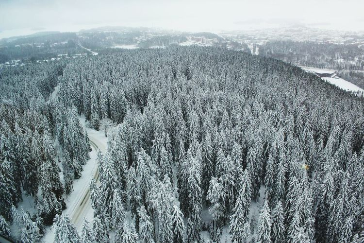 The Culture Of The Holidays Christmastime Christmas Around The World Finland Trip Christmas Trees Snow Winter Season  Nature Beauty In Nature Day Tourism No People Landscape Cold Temperature Awesooooome!