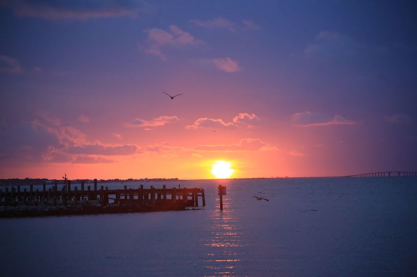 Pelican Pier Clouds Ocean Fort Morgan Alabama Mobile Bay Water Sky Sunset Bird Sea Beauty In Nature Scenics - Nature Sun Animal Animal Themes Flying Nature Tranquility Cloud - Sky Tranquil Scene Group Of Animals Beach Sunlight No People