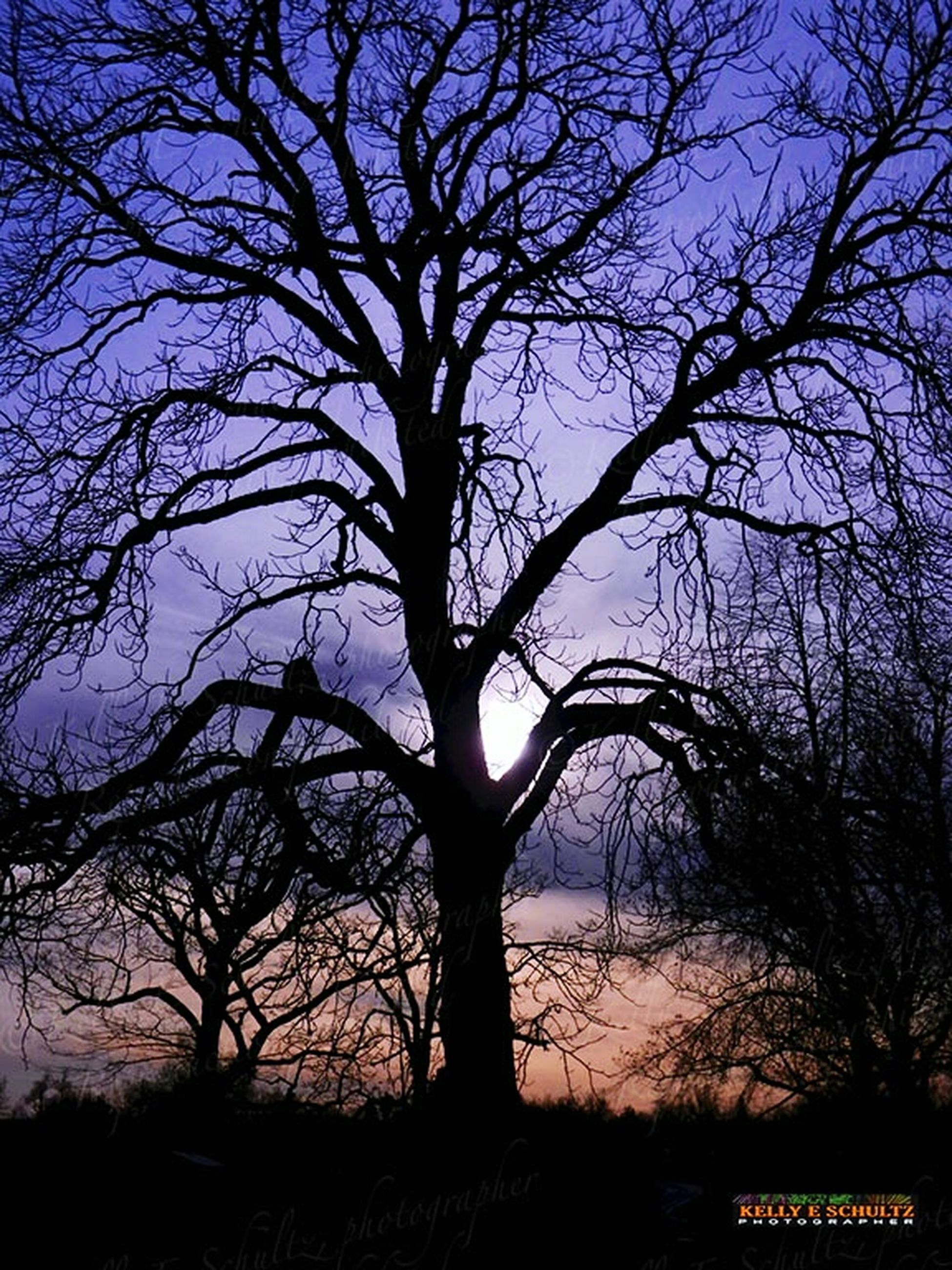 tree, nature, sky, branch, tranquility, beauty in nature, bare tree, outdoors, sunset, tree trunk, silhouette, tranquil scene, scenics, no people, day