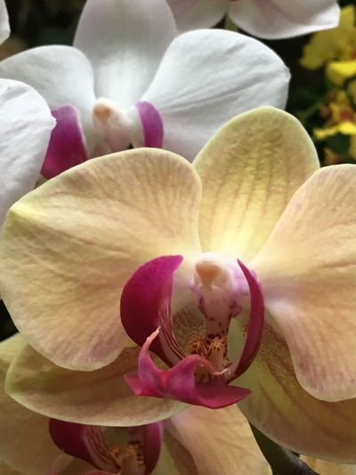 Flowering Plant Flower Petal Fragility Vulnerability  Plant Beauty In Nature Inflorescence Freshness Growth Close-up Orchid Flower Head Pink Color Pollen Nature No People Focus On Foreground Stamen Day