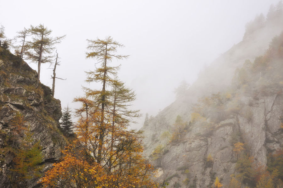 Mountain with autumns tree and fog in Ticino, Switzerland. Autumn Beauty In Nature Branch Color Day Fall Fog Foggy Foggy Morning Forest Landscape Mountain Mountain Range Nature No People Outdoors Pine Tree Pine Woodland Power In Nature Scenics Sky Swiss Alps Tranquil Scene Tranquility Tree