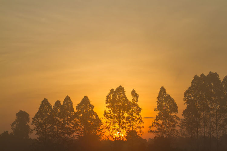 Beauty In Nature Cloud - Sky Environment Idyllic Land Landscape Nature Orange Color Outdoors Plant Scenics - Nature Silhouette Sky Sunset Tranquil Scene Tranquility Tree