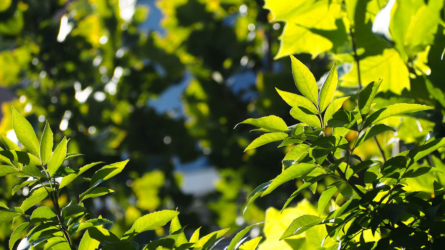 Close-Up Of Leaves On Sunny Day