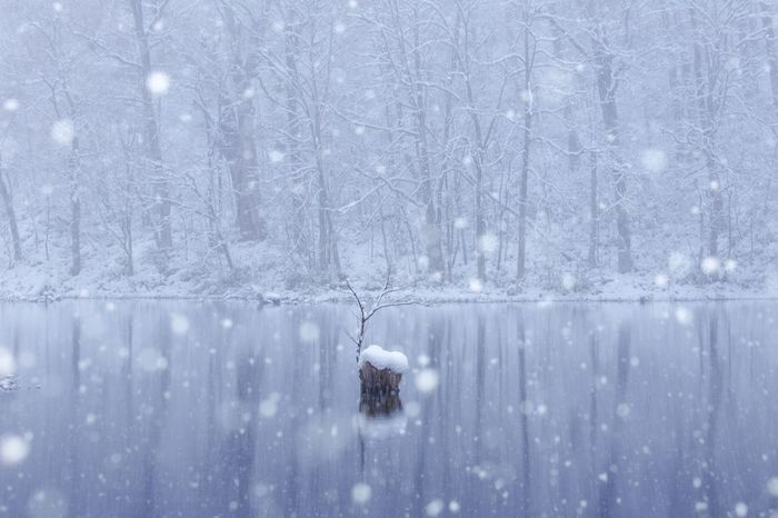 Reflection Japan Snow Winter Nature Landscape Outdoors Tree Beauty In Nature
