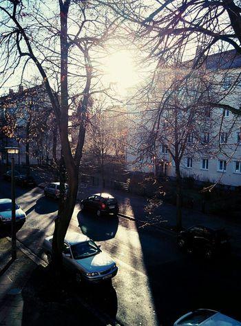 Autumn Sunshine Cold