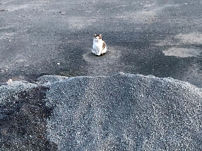 Lonely Cat always walkalone ! Background Stillstanding Animal Animal Themes One Animal Vertebrate High Angle View Mammal Day Outdoors Nature Pets Feline Cat Sitting