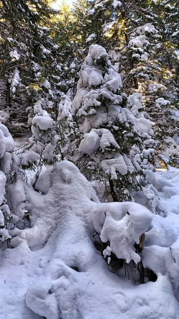 Walking in the woods...;)Snow Winter Cold Temperature Nature Tree No People Outdoors Day Animal Themes Beauty In Nature Close-up Mammal Mountain View Winter Snow ❄ Scenics Pine Woodland Pinetrees🌲 Pine Forest Sunray Mountain Winter Wonderland Winter Landscape Winterscapes Snowy Trees