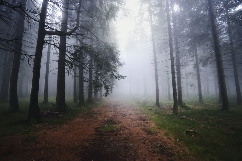 • Brend (Furtwangen) • Blackforest Forest Trees Tree_magic Tree_collection  Fog Germany Taking Photos Beautiful Walk Nature Nature_collection Naturelovers Natureshots Nature_perfection Nature Photography Photography Photooftheday Photographer Canonphotography Canon_official The Magic Mission Canon_photos Canon Canon6d
