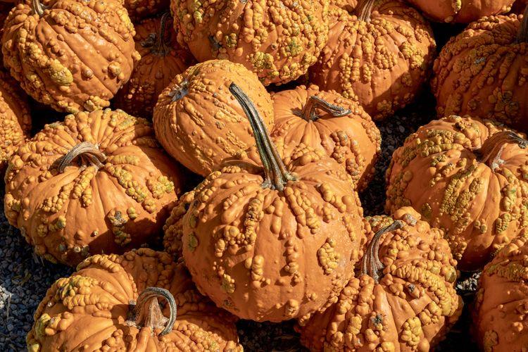 Full frame shot of pumpkins