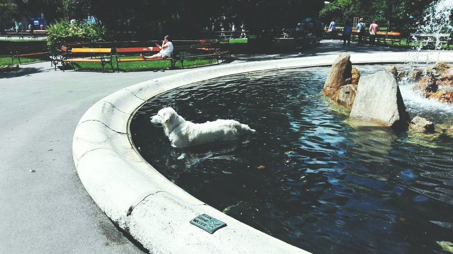 His pool. Water Day Dog Life Dogs Of EyeEm Dog Outdoors Beauty In Pool Day  Parks And Recreation Park View Park