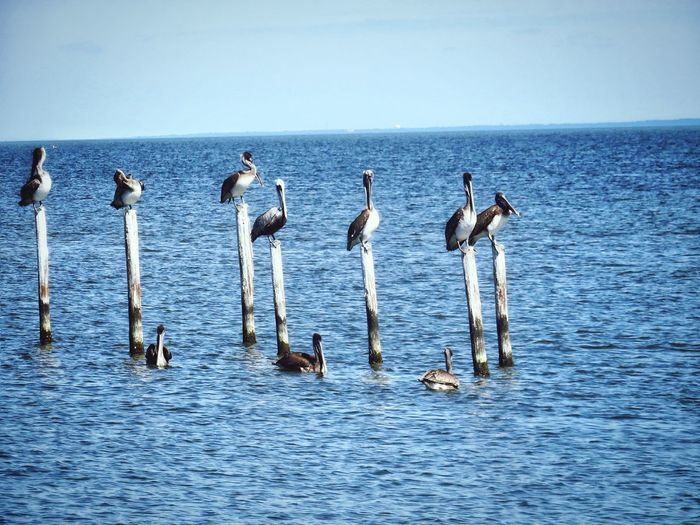 Beauty in nature Ocean Perching Bird Animal Themes Birds Large Group Of Animals Water Birds Preening Outdoors Nature Sea Life Animal Wildlife Water Sea Sportsman Teamwork Togetherness Surfing Athlete Horizon Over Water Sky Pelican