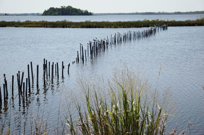 Outdoors No People Nature Day Landscape Tranquility Lake Water Sky Grass Beauty In Nature Animal Themes Birds Lines And Angles Scenics Beauty In Nature Grass Fencepost Animal Wildlife Segments Blackwater National Wildlife Refuge