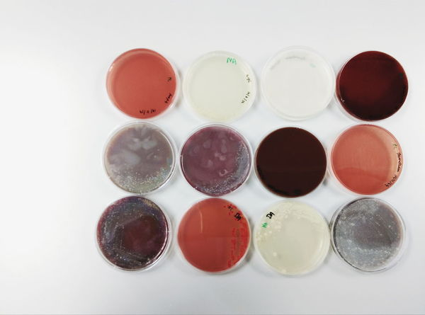 Beautifully Organized MedTech Lab Bacteria