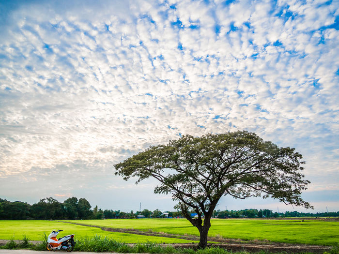 Butiful Nature Clounds  Landscape Nature One Tree Rice Rice Field Rural Rural Scene Sky Sky And Clouds Tree Tree