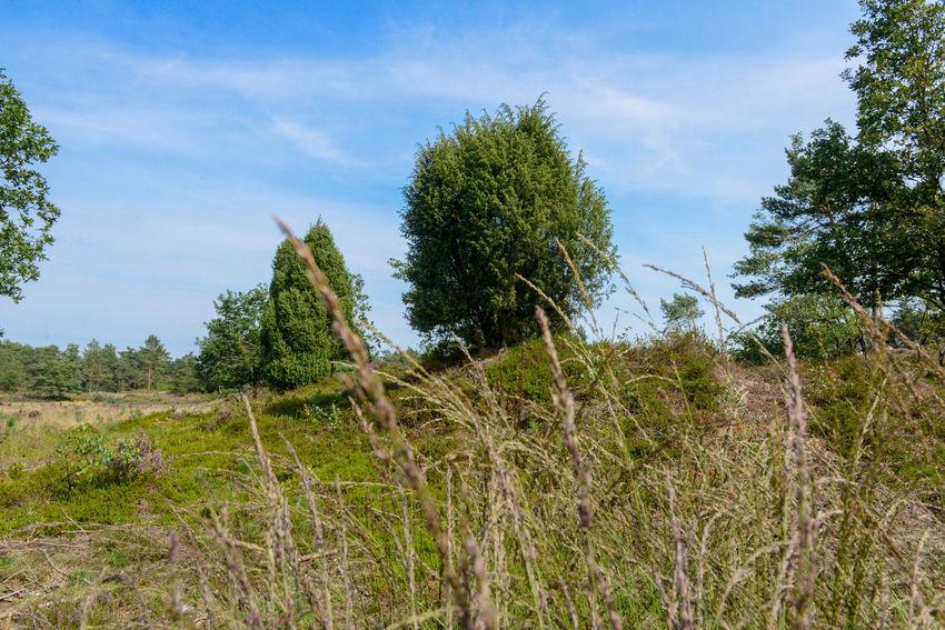 Nieuw Soerel walk in Nunspeet, The Netherlands Clear Sky Grass Netherlands Nunspeet The Netherlands Tree Veluwe Vierhouten Beauty In Nature Forest Holland Nieuw Soerel Sky Soerel Vierhouter Heide