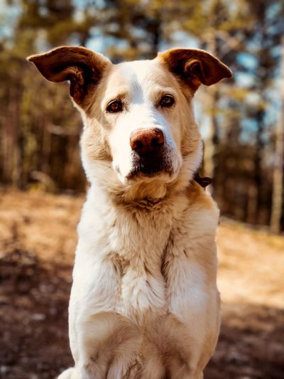 The Guardian... Dog Portrait Dogs Of EyeEm Theguardian Dog Pets Domestic Animals One Animal Animal Themes Focus On Foreground Mammal Looking At Camera Portrait