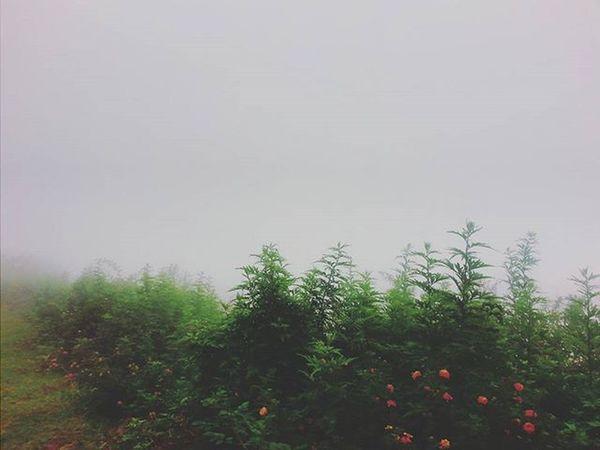 Greenary! 🌲🌲🌲🌳🌳🌳❄❄ Plants Flowers Greenary Naturelovers Foggy Fog 11°C Kodaikanal Trees Silhouette Beautiful India South Southindia _soi Instatravel Travel Tamilnadu Travel Traveljournal Pixelpanda_india Incredibleindia Picturesofindia Beautifulindia Hippieinhills indiatravelgram desi_diaries abstracttrees indiaclicks