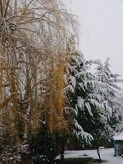 Outdoors Tree Beauty In Nature Close-up Snowing Sky