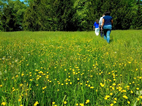 Walking along the yellow wildflowers and tall grass Walk Exercise Group Of People Yellow Wildflower Grass Green Healthy Step Walk Men Women Togetherness Standing Field Shadow Tree Grass Green Color The Great Outdoors - 2018 EyeEm Awards