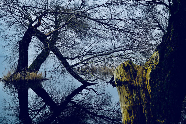 Bäume Spiegelungen Winter Bare Tree Beauty In Nature Branch Cold Temperature Day Dead Tree Hochwassereste Kahle Bäume Nature No People Outdoors Scenics Seeufer Sky Snow Tranquil Scene Tranquility Tree Tree Trunk Winter
