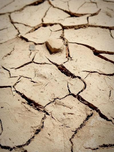 Drought Dry
