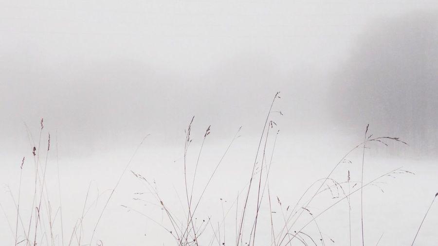 Winterwhitebycanvaspop AMPt_Nature Simplicity