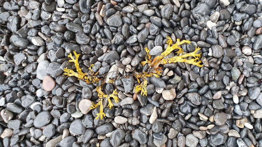 High angle view of yellow leaf on pebbles