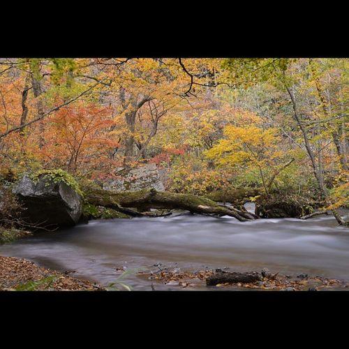 風景 奥入瀬渓流 紅葉