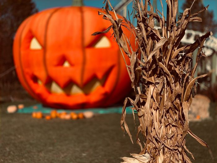 Close-up of jack o lantern and dry leaves during halloween
